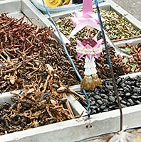 food in Bangkok from insects and worm