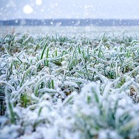Green grass field covered with frost. Shallow depth of field.
